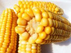 Golden Bantam Corn Heirloom Seeds - Seeds may be treated - Corn Market, Popcorn Seeds, Corn Stalks, Corn Plant, Herb Seeds, Multicooker, Clay Soil, Sweet Corn, No Cook Meals