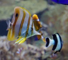 Fishy ~ photographer Ruth Raymond  #sea #ocean #fish #tropical_fish