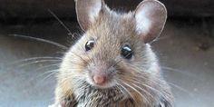 Dieren met grote hersenen zijn niet altijd slimmer http://www.scientias.nl/dieren-met-grote-hersenen-zijn-niet-altijd-slimmer/105886…