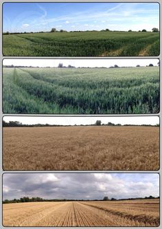 Just look at that! The same field over three months. Incredible! #farm24 #onlyfarming