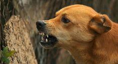 തെരുവുനായ്ക്കളെ അടിച്ചുകൊന്ന സംഭവം;നായ്ക്കളെ അടിച്ചുകൊന്നത് ഹെല്ത്ത് ഇന്സ്പെക്ടറുടെ നിര്ദേശപ്രകാരമെന്ന് മൊഴി നൽകി പിടിയിലായവര്'' Happy Campers, Dog Growling, Rage, Stop Dog Barking, Dog Attack, Aggressive Dog, Dog Behavior, Dog Training Tips, Dog Owners