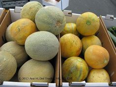 Melons galore at the Farmers' Market now--as high in potassium as bananas for half the calories--1 cup only 50 calories and 420 mg potassium--equal to a banana's potassium! Photo © 2012 Ann M. Del Tredici, MS, RD, CDE