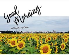 Best Good Morning Status for Love, Friends and Family Funny Good Morning Greetings, Good Morning Sunday Images, Good Morning Wishes Quotes, Good Morning Beautiful Flowers, Good Morning Image Quotes, Morning Quotes Images, Good Morning Picture, Good Morning Love, Morning Pictures