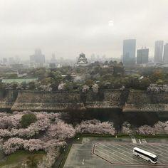 去年初めて行って気に入ったので再びKKRホテル大阪12階にあるレストランでディナーを楽しんできました 大阪城公園の桜は満開でした 雨だったのが残念でしたが