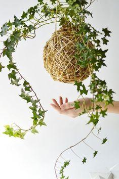 Unique Hanging Kokedama Ball Ideas for Hanging Garden Plants selber machen ball String Garden, Moss Garden, Garden Art, Garden Plants, House Plants, Ikebana, Air Plants, Indoor Plants, Indoor Gardening