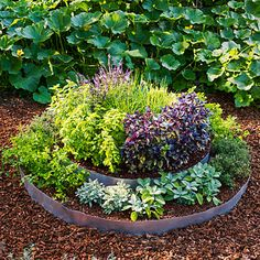 outdoor herb garden Each herb is accustomed to its own ecosystem, and creating a garden design in one-size-fits-all is not very easy. Here are several tips about herb garden layout. Raised Herb Garden, Raised Bed Garden Design, Herb Garden Design, Building A Raised Garden, Garden Types, Herbs Garden, Raised Gardens, Patio Pergola, Backyard