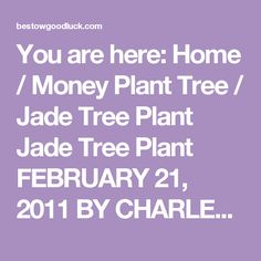 You are here: Home / Money Plant Tree / Jade Tree Plant Jade Tree Plant FEBRUARY 21, 2011 BY CHARLES    Jade Tree Plant; Money Plant or a Lucky Friendship Tree By Honey B Wackx  Lucky Jade Tree Plant Commonly known as Jade Tree Plant, jade plant, friendship tree, lucky plant or Money Plant, Crassula ovata is a succulent plant with small pink or white flowers.     It is native to South Africa, and is common as a houseplant worldwide. It is sometimes referred to as the money tree. The dwarf…