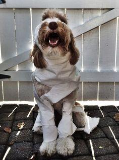 diy Dog costume - 40 Most Adorable Dog Halloween Costumes & DIY Cat Costumes Dog Ghost Costume, Diy Dog Costumes, Pirate Costumes, Witch Costumes, Devil Costume, Costume Ideas, Easy Adult Halloween Costumes, Halloween Stuff, Halloween Diy