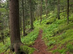 Baxter Creek Trail - Great Smoky Mountains | RootsRated.com