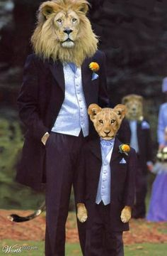 Resource for amateur manipulations featuring visual puns. Arte Bob Marley, Animals And Pets, Cute Animals, Lions Photos, Visual Puns, Lion Wallpaper, Lion Pictures, Lion Art, Cat People