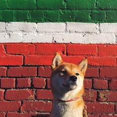 The 100 Most Aww-Inspiring Animals Of Instagram #refinery29