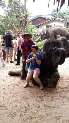 Happy ;) Chiang Mai Elephant, Elephant Camp, Happy, Animals, Animales, Animaux, Ser Feliz, Animal, Animais