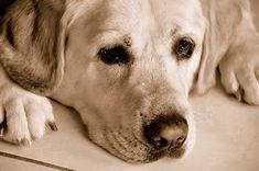 """""""C'est juste un chien"""", """"c'est trop de travail ou d'argent"""", """"donne-le ou abandonne-le"""" etc, qui n'a jamais entendu ces remarques cruelles et blessantes..."""