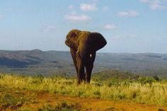 Zuid Afrika, Kruger Parc