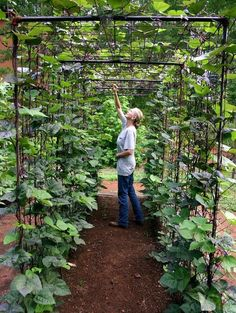 Vegetable Garden Design: DIY Bean Trellis Now that's a great way to grow beans! DIY vegetable garden building a bean tunnel ; Gardenista The post Vegetable Garden Design: DIY Bean Trellis appeared first on Garden Diy. Vertical Vegetable Gardens, Backyard Vegetable Gardens, Vegetable Garden Design, Vegetable Ideas, Beans Vegetable, Urban Garden Design, Vertical Garden Design, Garden Modern, Bean Trellis
