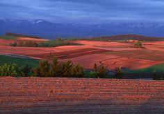 夕日に染まる春の丘 美瑛町 新栄の丘から眺める福富地区の田園風景。春を迎え忙しく動くトラクター、ひっそりと建つ赤い屋根の家、広大で豊かな耕地が、夕日に照らされて赤く染まる。残雪の十勝岳連峰が見下ろしている。