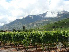 Vineyard, Mountains, Nature, Travel, Outdoor, Maria Theresa, Outdoors, Naturaleza, Viajes