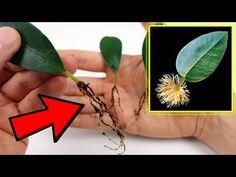 Las Mejores 32 Ideas De Planta Medicinal Consejos Para La Salud Cremas Antiarrugas Casera Como Plantar Una Planta