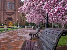 Smithsonian in Spring