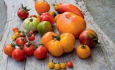 Klettergerüst Tomate : Besten tomaten im garten bilder auf gartenpflanzen