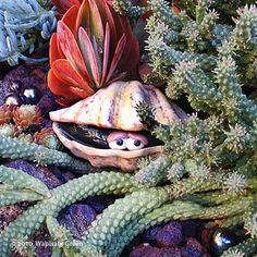 This whimsical ceramic clam peeks out of the surrounding succulent seascape @Amy Helmick Green.