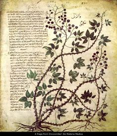 "Bramble from Dioscorides' De Materia Medica. Between 50 and 70 AD, Dioscorides wrote a five-volume book in his native Greek, Περὶ ὕλης ἰατρικῆς, known more widely by its Latin title De Materia Medica (""Regarding Medicinal Substances"") that is a ""precursor to all modern pharmacopeias"". It remained in use until about CE 1600."