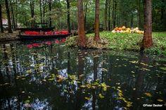 #Herbst im #Spreewald  mein Tipp www.hotel-stern-werben.de