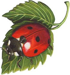 Ladybug Tattoos, Designs And Ideas : Page 23