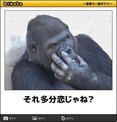 それ多分恋じゃね? Japanese Funny, Can't Stop Laughing, Feeling Down, Good Jokes, Funny Art, How To Relieve Stress, Funny Photos, Funny Animals, Haha