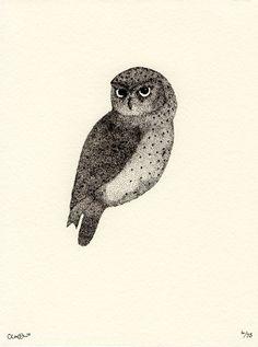 'Little Owl' by Claire Hartigan