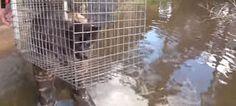 """""""O Grito do Bicho"""": Salvando animais após o furacão Mattew - EUA"""