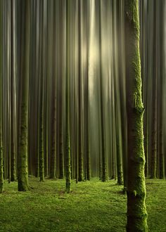 Soft wood and moss with hints of golden light