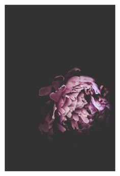 """Shop our original botanical photographs that make for unique wall art to compliment your home or office decor. They also make for a one-of-a-kind gift. You can find """"Peony"""" (along with many other flowers) in our Etsy Shop currently offered in the following sizes: 5x7, 8x10, and 11x14."""