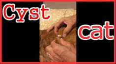 """cat cyst removal. animal cyst popping """"Health and Medicine"""""""