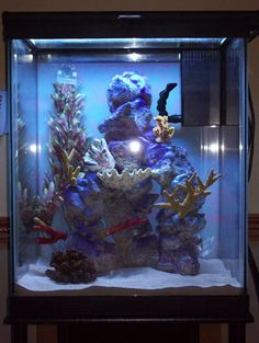 My lovelies on pinterest seahorses tanks and ikea hackers for Seahorse fish tank