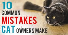 Must-read for cat owners - the top 10 cat health care mistakes. http://healthypets.mercola.com/sites/healthypets/archive/2010/12/07/common-mistakes-made-by-pet-cat-owners.aspx