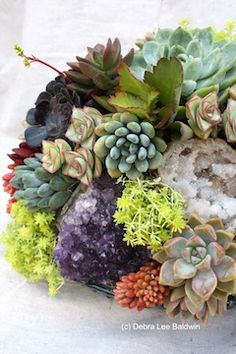 Amethyst crystals and other gemstones make intriguing additions to a jewel-like succulent garden.   By Danielle Romero, Los Angeles