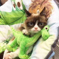 Caught! 'Being cute' makes Grumpy Cat grumpier!