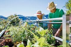 Im Hochbeet ganzjährig eigenes Obst und Gemüse anbauen --> http://baufux24.com/im-hochbeet-ganzjaehrig-eigenes-obst-und-gemuese-anbauen/