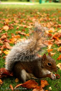 I love the Fall  so I can find lots of nuts under the trees,