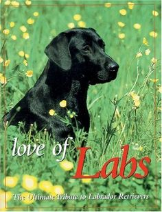 Love of Labs: The Ultimate Tribute to Labrador Retrievers (Petlife Library) by Todd R. Berger, http://www.amazon.com/dp/B003YCQDUC/ref=cm_sw_r_pi_dp_2.IJpb02TG0C6