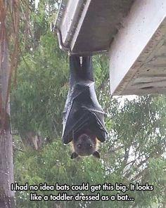 funny giant bat