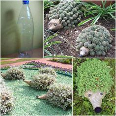 Recycled palstic bottles and small plants = really cute hedgehog garden planters.