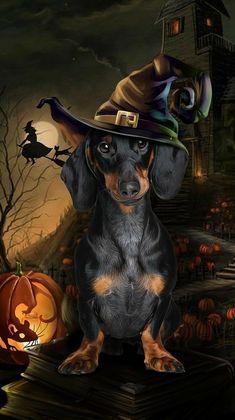 Halloween Fonts, Halloween Witch Decorations, Halloween Artwork, Halloween Pictures, Halloween Wallpaper, Halloween Cat, Arte Dachshund, Dapple Dachshund, Dachshund Puppies