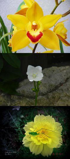 Green Little Fella on Yellow Flower