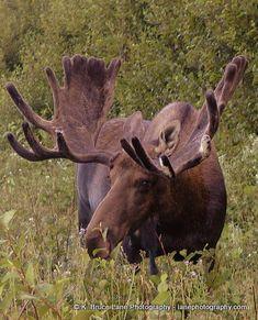 Taken in Gros Morne National Park in Newfoundland and Labrador.