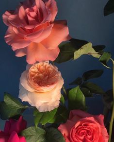 Romantic Flowers, Flowers Nature, My Flower, Flower Art, Beautiful Flowers, Flower Phone Wallpaper, Flower Wallpaper, Aesthetic Roses, Aesthetic Vintage