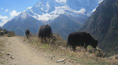 Trekking the Annapurna Circuit, Nepal