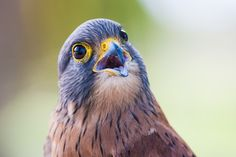 Pássaros brasileiros  #natureza #animais #flores #cores #sustentabilidade #turismo #paz #brasil #br