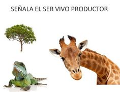 SAPOS Y CULEBRAS: ANIMALES DOMÉSTICOS O SALVAJES Giraffe, Moose Art, Savages, Vocabulary, Animales, Giraffes
